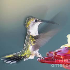Robert Edgar - Hummingbird