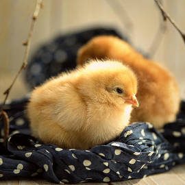 Tanja Riedel - 2 Little Chicks