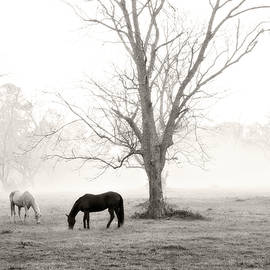 Scott Pellegrin - Magical Morning