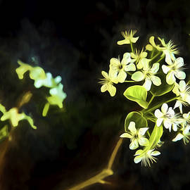 Kay Brewer - Pear Blossoms Art