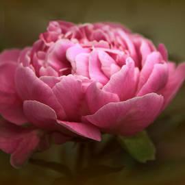 Jessica Jenney - Peony Blossom