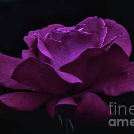 Ornella Bonomini - Rose In The Garden