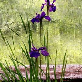 Yumi Johnson - Siberian Iris