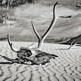 Sandra Selle Rodriguez - Skull and Antlers