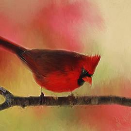 Darren Fisher - Spring Cardinal