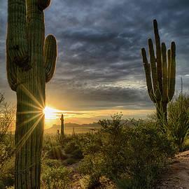 Saija Lehtonen - The Beauty of the Sonoran Desert