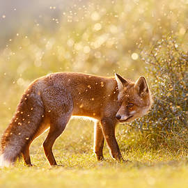 Roeselien Raimond - The Fox And The Fairy Dust