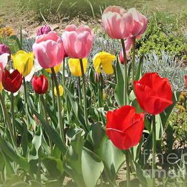 Photographic Art and Design by Dora Sofia Caputo - The Tulip Garden