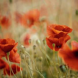 Summer Poppy Meadow - Nailia Schwarz