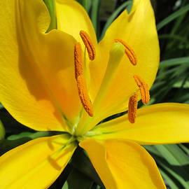 Michele Caporaso - Yellow Lily