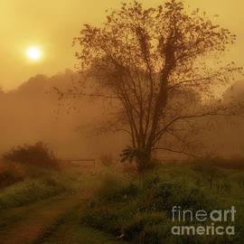 Thomas R Fletcher - Misty Mountain Sunrise