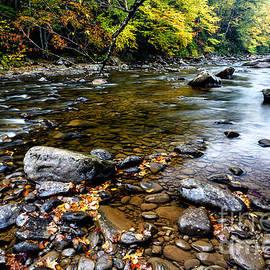 Thomas R Fletcher - Fall along Williams River