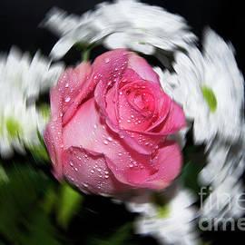 Elvira Ladocki - Purple Rose