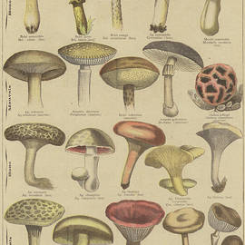 Edible and poisonous mushrooms - French School