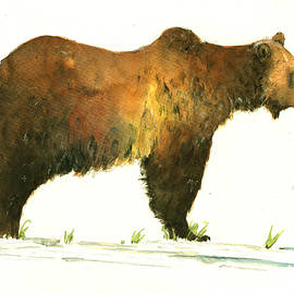 Grizzly brown bear - Juan  Bosco