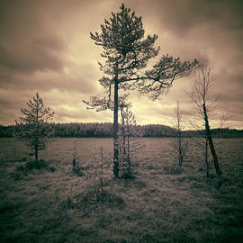 Jouko Lehto - InfraDawn