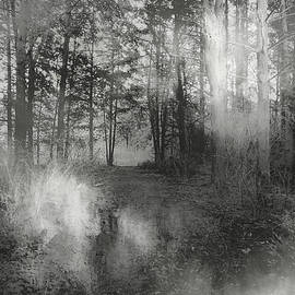Theresa Campbell - Into The Woods