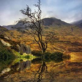 Ian Mitchell - Lone Tree