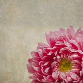 Pink Flower - Jelena Jovanovic