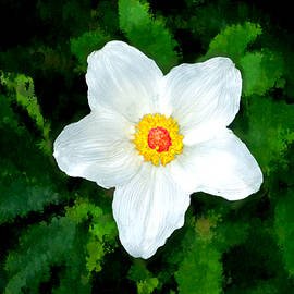 Bruce Nutting - Singular White Beauty