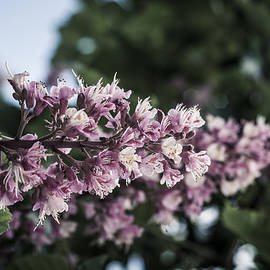 Miguel Winterpacht - Spring Garden