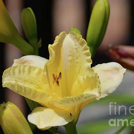 Ruth Housley - Yellow Daylily