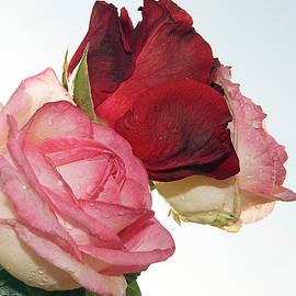 Elvira Ladocki - Three Roses