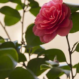 Ornella Bonomini - Roses In The Garden
