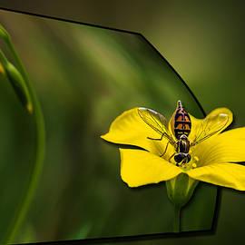 Susan Whitaker - 3D Bee Yellow Bloom