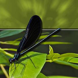 Susan Whitaker - 3D Black Dragonfly