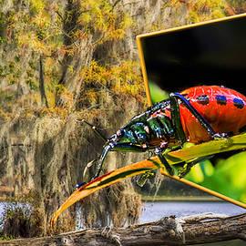 Susan Whitaker - 3D Red Bug