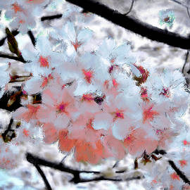 Bruce Nutting - Colorful Cherry Blossoms