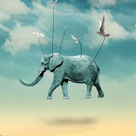 Mark Ashkenazi - Elephant