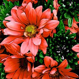 Bruce Nutting - Floral Favorites