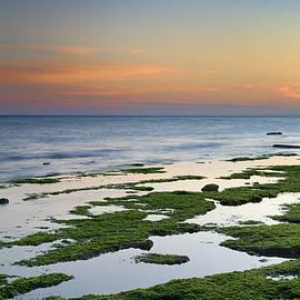 Guido Montanes Castillo - Green coast