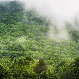 Thomas R Fletcher - Mountain Mist