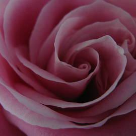 Carol Welsh - Rose Center