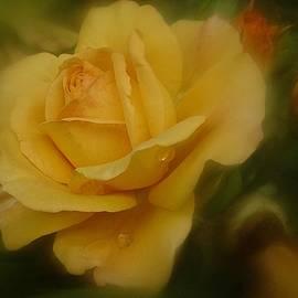 Richard Cummings - Rose Oil