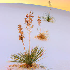Henk Meijer Photography - White Sands National Monument
