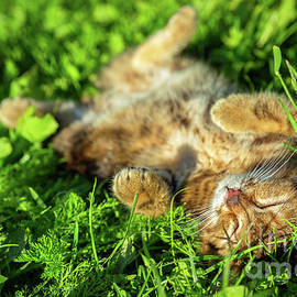 Jerzy Lekki - Young cat in the grass
