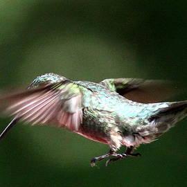 Travis Truelove - 4734-001- Ruby-throated Hummingbird
