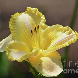 Ruth Housley - Beautiful Daylily