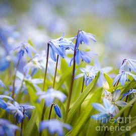 Elena Elisseeva - Spring blue flowers