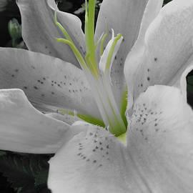 Michele Caporaso - White Lily