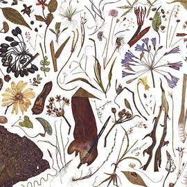 Herbarium Specimen - Rachel Pedder-Smith