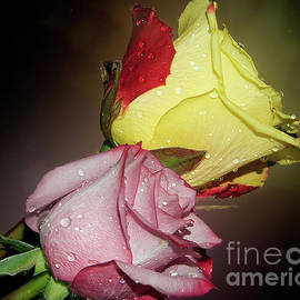 Elvira Ladocki - Roses