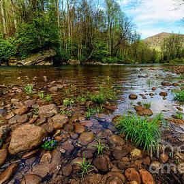 Thomas R Fletcher - Williams River Spring