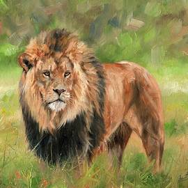 Lion - David Stribbling