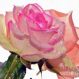 Elvira Ladocki - Two Roses