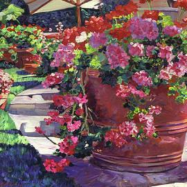 David Lloyd Glover - Geranium Color Pot